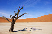 Amazing dead trees in beautiful desert. — Stock Photo