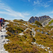 Stock Photo: Hikers on Overland Trail, Cradle Mountain, Tasmania