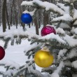 Stock fotografie: Christmas decorations hanging on Christmas tree in forest.
