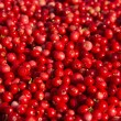 Stock Photo: Rich harvest of wild cowberries.
