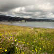 Half Moon Bay with Spring Wildflowers — Stock Photo