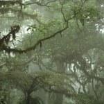 canopée de la forêt tropicale — Photo