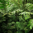 Stock Photo: Dense Rain Forest Jungle