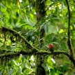 Red Tropical Bird — Stock Photo