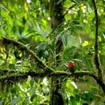 Red Tropical Bird — Stock Photo