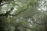 Tropical Rain Forest Canopy — Stock Photo