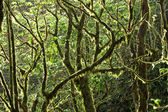 Mossy Rainforest Canopy — Stock Photo