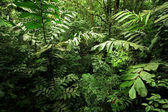 Selva densa floresta tropical — Foto Stock