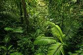 Dense Rain Forest Jungle — Stock Photo