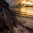 Tropical FloridSunset — Stock Photo #13852811