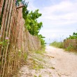 Path to sunny caribbebeach — Stock Photo #13852842