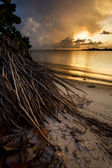 Tropischen florida sunset — Stockfoto