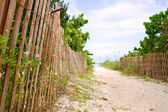 Path to sunny caribbean beach — Stock Photo