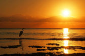 Heron and Florida Sunrise — Stock Photo
