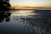 Tidal Flats in South Florida — Stock Photo