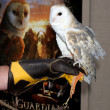 Barn Owl named Twilight — Foto de Stock