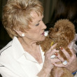 Jeanne Cooper & Lee Bell's dog Joy - Stock Photo