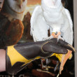 Barn Owl named Twilight — 图库照片