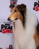 Lassie — Foto de Stock