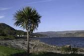 Argyle coast — Stock Photo
