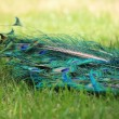 Foto Stock: Colored tail