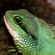 Reptile — Stock Photo