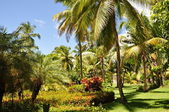 Caribbean garden — Stock Photo