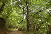 A bucolic path in the forest — Stock Photo