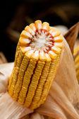 Kolby kukurydzy — Zdjęcie stockowe
