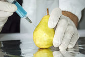 Yellow pear in genetic engineering laboratory — Stock Photo