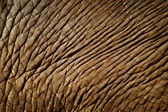 Elephant skin — Stock Photo