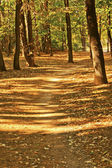 Path between two rows of trees — Stock Photo