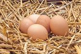 œufs de poule — Photo