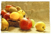 Autumn fruits — Stock Photo