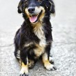 Cute black dog — Stock Photo