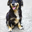Stock Photo: Cute black dog