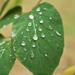 Green leaf and water drops  — Stock Photo