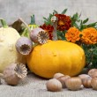 Autumn pumpkins and tagetes flowers. — Stock Photo