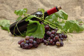 Sladké červené hrozny s láhev červeného vína. — Stock fotografie