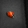 Ladybug isolated on black background. — Stock Photo #46412899