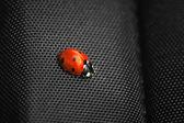 Ladybug isolated on black background. — Stock Photo