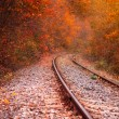 Railway in the beautiful autumnal forest — Stock Photo