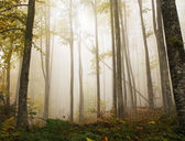 Mystic forest nature background — Stock Photo