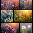 Collage with beautiful flowers in the sunshine - Stock Photo