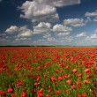 Poppy field with beautiful cloudy sky — Stock Photo
