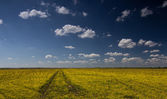 Rural road in a beautiful yellow flower field — Stock Photo