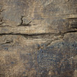 Oil stained old grunge wood texture — Stock Photo