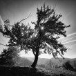 Meadow with grass on a hilltop and big autumn tree black and white artistic photo — Stock Photo