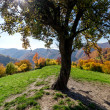 Meadow with grass on a hilltop and big autumn tree with blue sky — Stock Photo