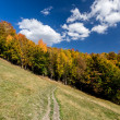 Autumn forest and path in the meadow with beautiful blue cloudy sky — Stock Photo